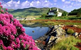 Обои цветы, горы, берег, Шотландия, домик