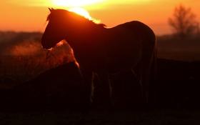 Картинка ночь, природа, конь