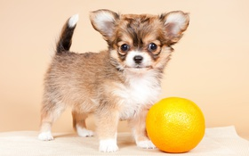 Картинка друг, собака, щенок