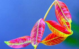 Картинка осень, листья, растение, цвет, ветка