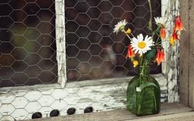 Обои ромашки, окно, букетик, полевые цветы, пузырёк