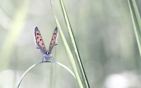 Обои растение, мотылек, крылья, лист, бабочка