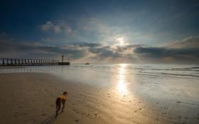 Картинка море, закат, собака