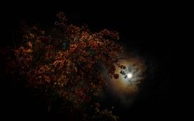 Обои небо, ночь, тучи, дерево, луна
