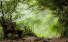 Обои скамья, парк, природа