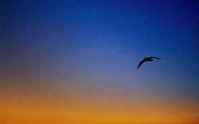 Картинка небо, чайки, вечер