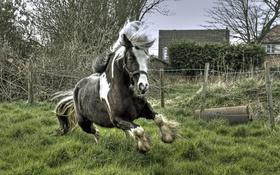 Обои фон, конь, бег
