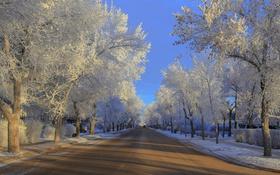Обои иней, дорога, деревья, зима
