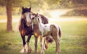 Обои лето, природа, кони