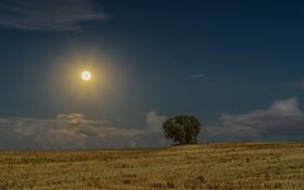 Обои облака, лунный свет, небо, ночь, фермы, деревья, сельская местность