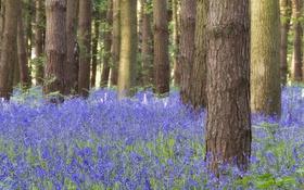 Обои лес, трава, деревья, цветы, ствол