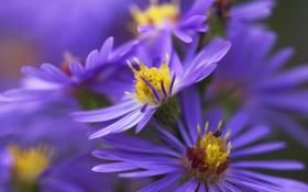 Обои растение, лепестки, природа, цветы