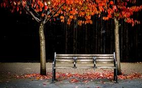 Обои осень, скамья, улица