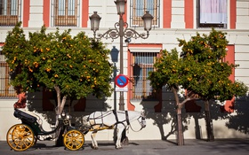 Обои пейзаж, город, лошадь, апельсиновые деревья