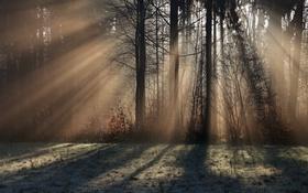 Обои свет, деревья, утро, туман