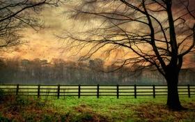 Обои поле, забор, дерево