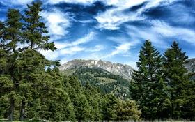 Обои деревья, небо, горы, природа