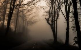 Картинка туман, дорога, деревья
