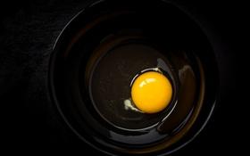 Обои фон, макро, яицо