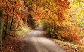 Обои дорога, осень, лес