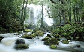 Обои лес, деревья, река, камни, водопад, поток, Австралия
