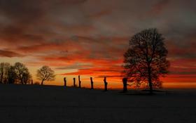 Картинка поле, небо, облака, деревья, ночь, силуэт, зарево