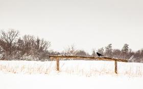 Картинка зима, небо, снег, ворона