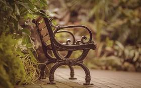 Обои зелень, скамейка, двор, скамья