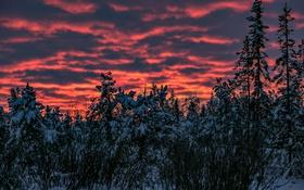Обои зима, небо, снег, деревья, закат