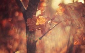 Обои осень, листья, макро, свет, ветки, блики, листок