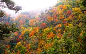 Обои дымка, склон, деревья, небо, лес, осень