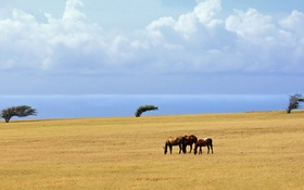 Картинка море, поле, облака, деревья, лошади