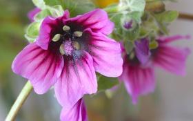 Картинка растение, цветок, лепестки, природа