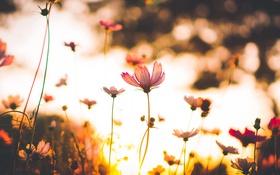 Обои макро, Цветы, солнце