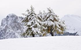 Картинка деревья, снег, природа