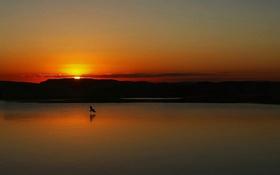 Обои закат, озеро, отражение, зеркало, птицы, оранжевое небо