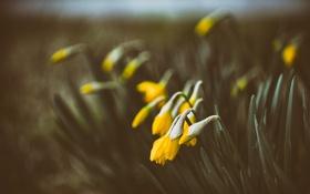 Обои цветы, желтые, лепестки