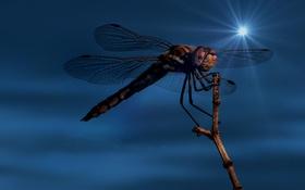 Картинка макро, растение, крылья, ветка, стрекоза, насекомое