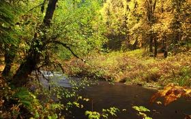 Обои осень, лес, листья, деревья, ветки, ручей