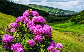 Обои город, деревья, холмы, природа, кустарники, цветы