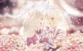 Картинка девушка, цветы, зонт, аниме, лепестки, арт, парень