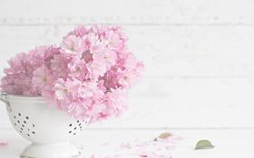 Картинка цветы, лепестки, цветение, листики, сито
