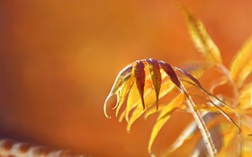 Обои осень, листья, природа, фон