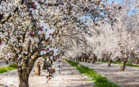 Картинка природа, весна, сад