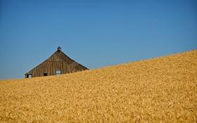 Обои поля пшеницы, сарай, фермы, колос, пшеница, поле, голубое небо