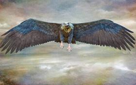 Обои небо, облака, птица, крылья, клюв, холст
