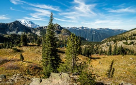 Обои лес, деревья, горы, озеро, камни, США, Rocky Mountain National Park