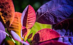 Обои осень, листья, макро, растение, цвет