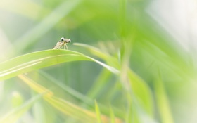 Обои насекомые, природа, фон