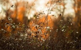Обои природа, фон, осень